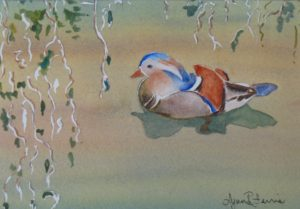 Wood Duck LR Ferris $125.00